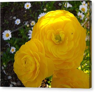 Canvas Print featuring the photograph Yellow Trio With Mini Daisies by Tamara Bettencourt