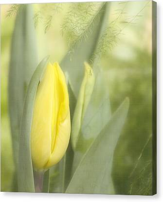 Yellow Tulip Bud Canvas Print by Kim Hojnacki