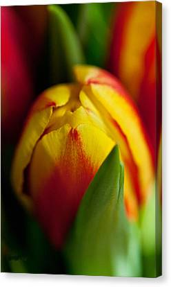 Canvas Print featuring the photograph Yellow Tulip by Sabine Edrissi