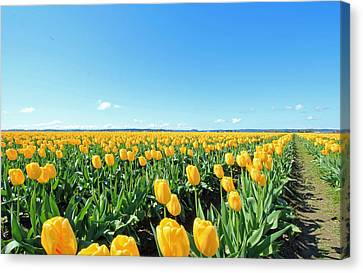Canvas Print featuring the photograph Yellow Tulips by E Faithe Lester