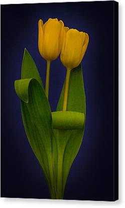 Yellow Tulips On A Blue Background Canvas Print by Eva Kondzialkiewicz