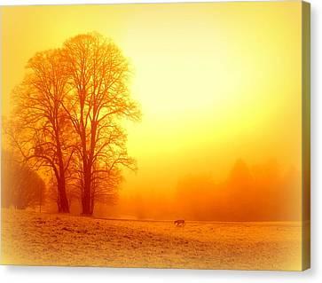 Yellow Winter Sunrise Canvas Print