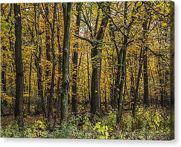 Yellow Woods On A Rainy Day Canvas Print by Karen Casey-Smith