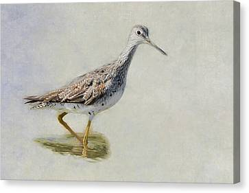 Yellowlegs Canvas Print by Bill Wakeley