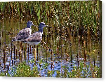 Canvas Print featuring the photograph Yellowlegs Of Texas by Gary Holmes