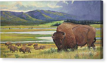 Yellowstone Bison Canvas Print