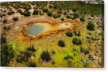Yellowstone Hot Pool Canvas Print