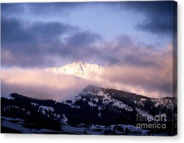 Yellowstone Morning Canvas Print by Sharon Elliott