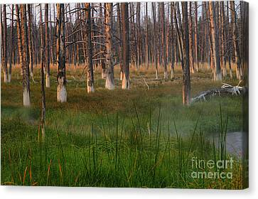 Canvas Print featuring the photograph Yellowstone Mysterious Morning by Teresa Zieba