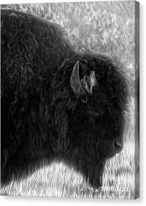 Yellowstone National Park Bison - 02 Canvas Print by Gregory Dyer