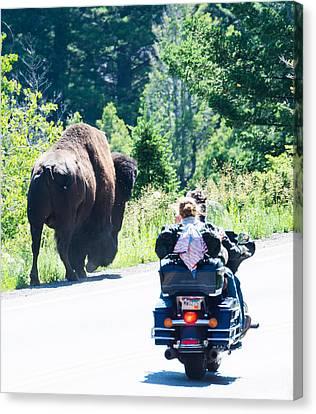 Yellowstone Road Hog Canvas Print
