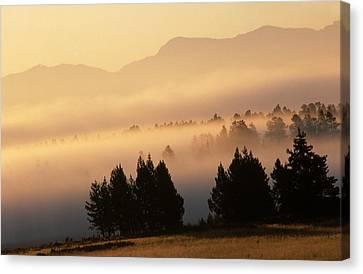 Yellowstone Sunrise Canvas Print by Steve Archbold