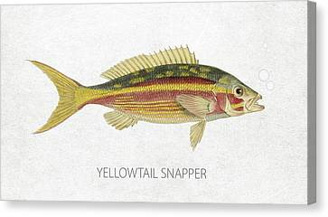 Yellowtail Snapper Canvas Print by Aged Pixel