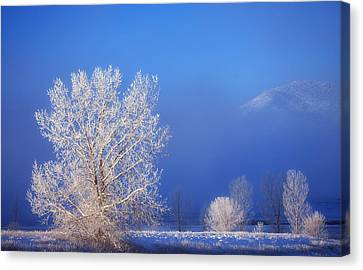 Winter Landscapes Canvas Print - Yesterday's Blues by Darren  White