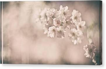 Early Spring Canvas Print - Yesterdays Sunshine by Robin Konarz