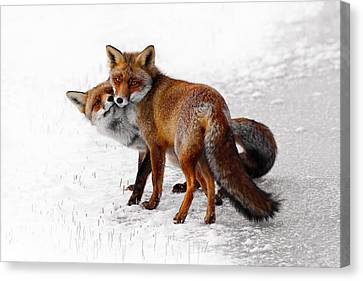 Shower Canvas Print - Yin Yang _ Red Fox Love by Roeselien Raimond