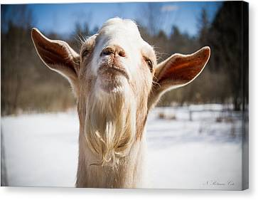 'yoda' Goat Canvas Print