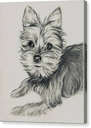 'yorkie' Canvas Print by Barb Baker
