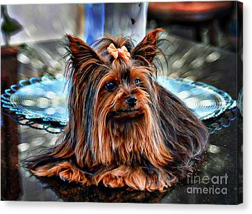 Yorkie Girl  Canvas Print