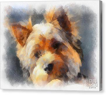 Yorkie Love Canvas Print