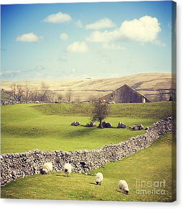 Yorkshire Dales With Dry Stone Wall Canvas Print