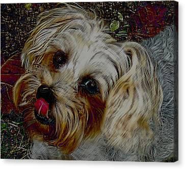 Yorkshire Terrier Artwork Canvas Print by Lesa Fine