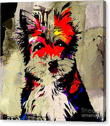 Yorkshire Terrier  Canvas Print by Marvin Blaine