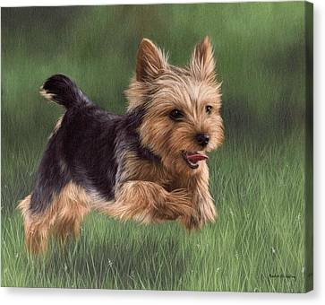 Yorkshire Terrier Painting Canvas Print by Rachel Stribbling