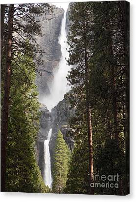 Yosemite Falls 2013 Canvas Print