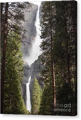 Yosemite Falls 2013 Canvas Print by Audrey Van Tassell
