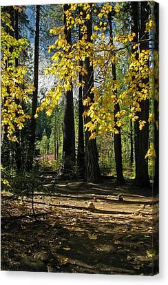 Yosemite Fen Way Canvas Print by John Haldane