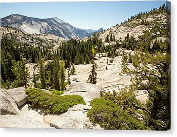 Yosemite National Park Canvas Print by Ashley Cooper