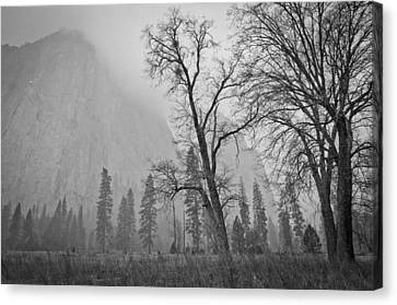 Canvas Print featuring the photograph Yosemite Storm by Priya Ghose