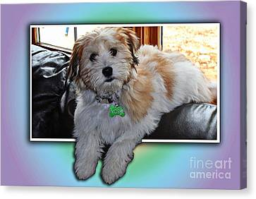 Yoshi Havanese Puppy Canvas Print by Barbara Griffin