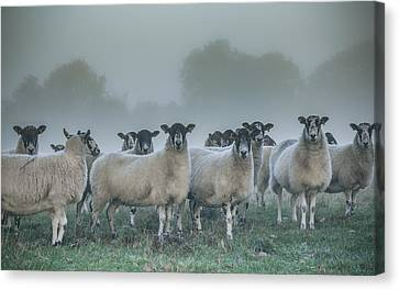 You And Ewes Army? Canvas Print by Chris Fletcher