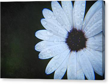 Dew Drops Canvas Print - You Answered My Cry by Laurie Search