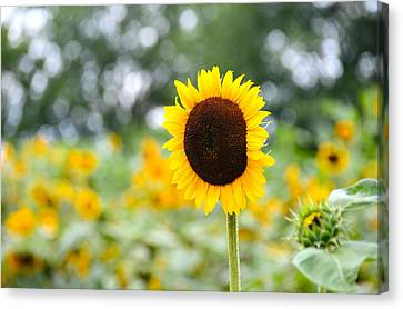 Canvas Print featuring the photograph You Are My Sonshine by Linda Mishler