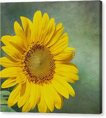 You Are My Sunshine Canvas Print by Kim Hojnacki