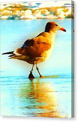 You Are The Only Gull For Me Canvas Print by Brian D Meredith