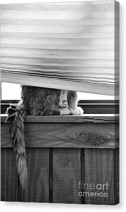 Canvas Print featuring the photograph You Can't See Me by Karen Slagle