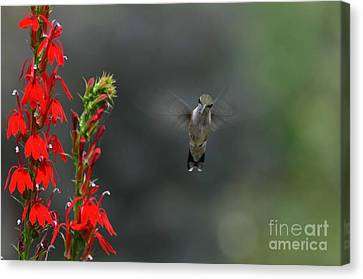 Canvas Print featuring the photograph You Looking At Me by Judy Wolinsky