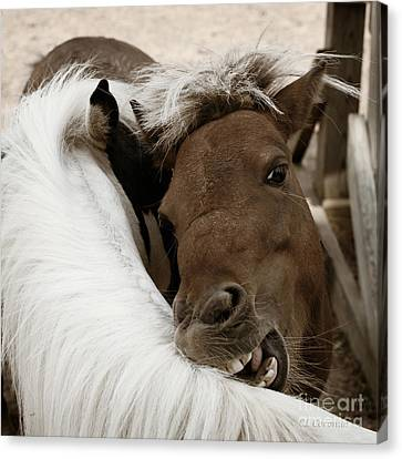 Canvas Print featuring the photograph You Scratch Mine by Carol Lynn Coronios