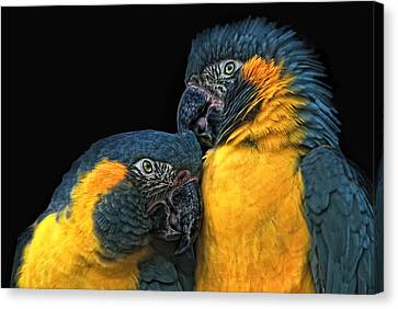 Blue And Gold Macaw Canvas Print - You Sexy Thing by Joachim G Pinkawa