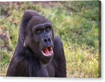 You Talkin' To Me? - Gorilla Chat Canvas Print