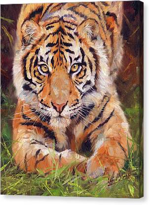 Young Amur Tiger Canvas Print by David Stribbling