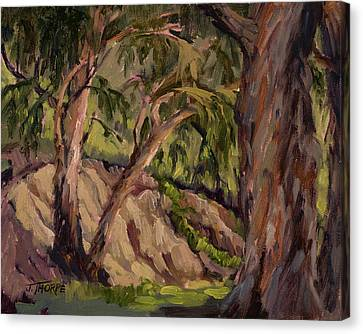 Young And Old Eucalyptus Canvas Print by Jane Thorpe