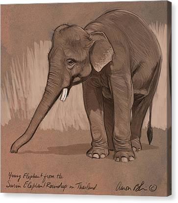 Young Asian Elephant Sketch Canvas Print