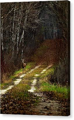 Young Buck And Autumn Canvas Print by Thomas Young