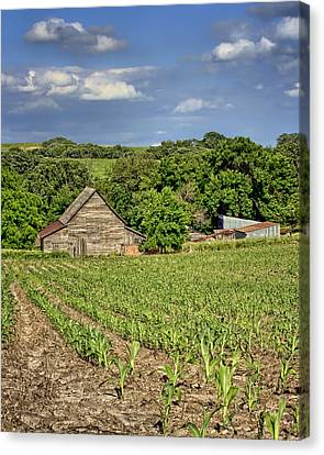 Young Corn Canvas Print