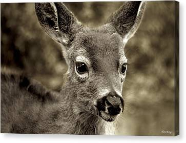 Young Curious Deer Canvas Print by Alex King
